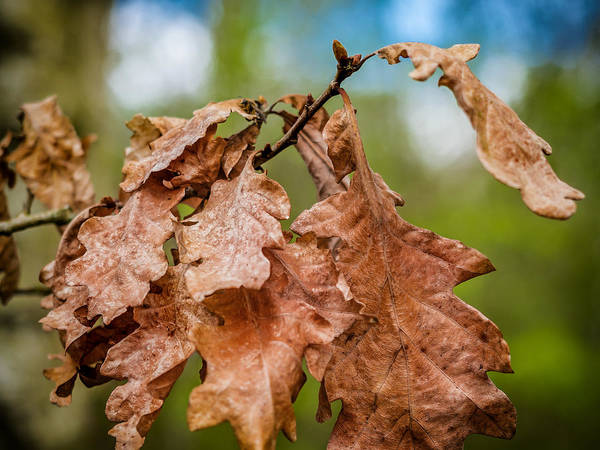 Photograph - Autumn Leaves by Nick Bywater