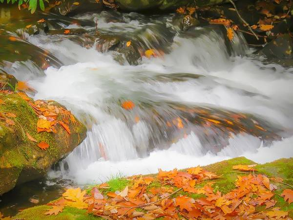 Digital Art - Autumn Leaves On Flowing Water by Rusty R Smith