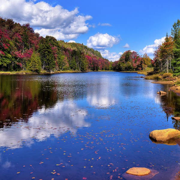 Photograph - Autumn Leaves On The Pond by David Patterson