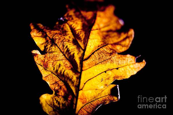 Photograph - Autumn Leaves  by Raimond Klavins