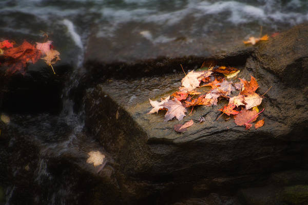 Wall Art - Photograph - Autumn Leaves by Tom Mc Nemar