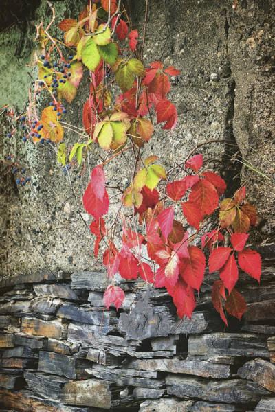 Photograph - Autumn Leaves by Tom Singleton