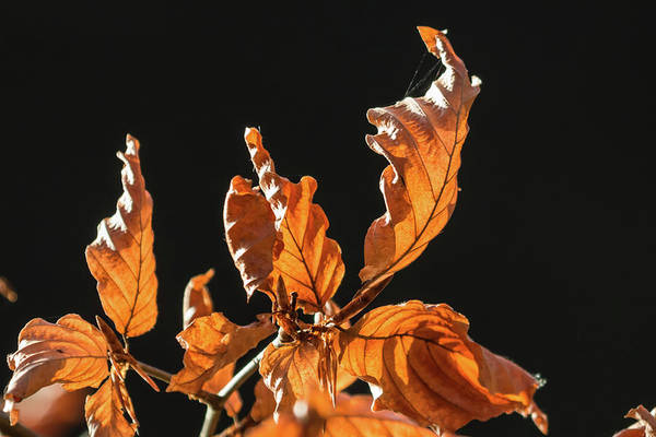 Photograph - Autumn Leaves by Wendy Cooper