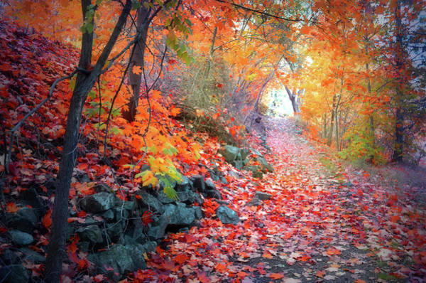 Photograph - Autumn Light At The End Of The Path by Tara Turner