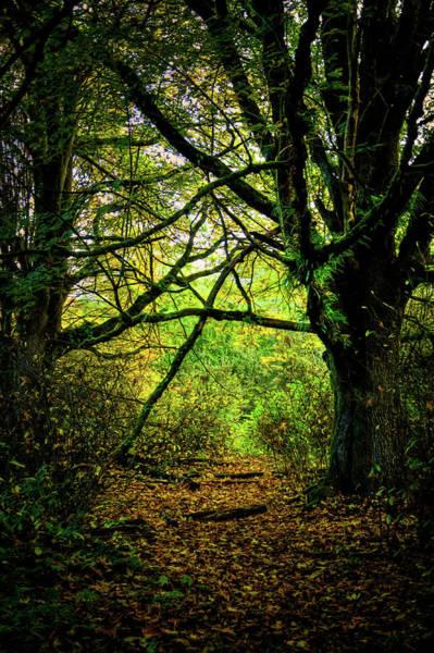 Photograph - Autumn Light by David Patterson