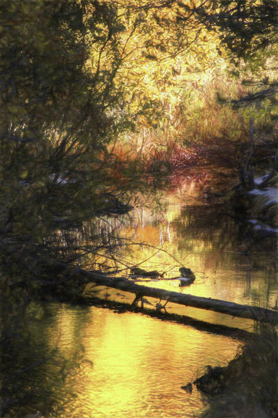 Wall Art - Photograph - Autumn Light by Donna Kennedy