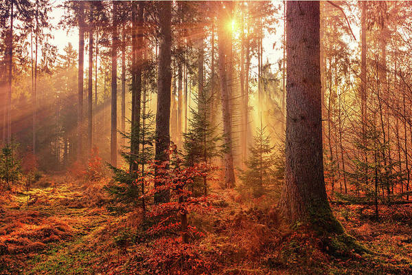 Photograph - Autumn Light by Movie Poster Prints