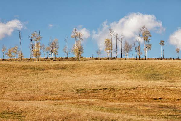 Photograph - Autumn Line-up by Denise Bush