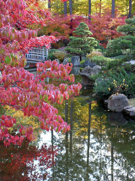 Photograph - Autumn Lines by Carol Groenen