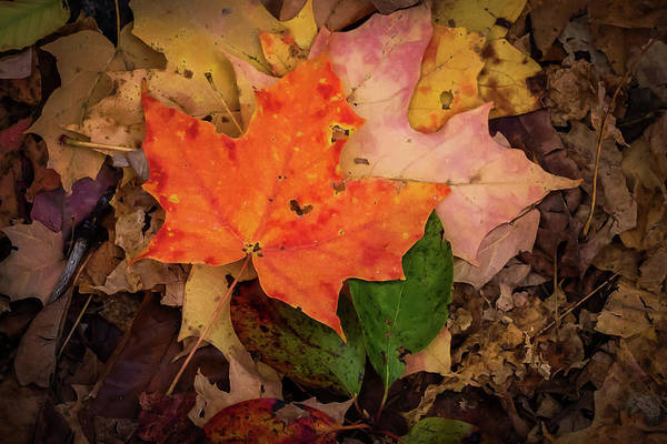 Photograph - Autumn Love by Terry DeLuco
