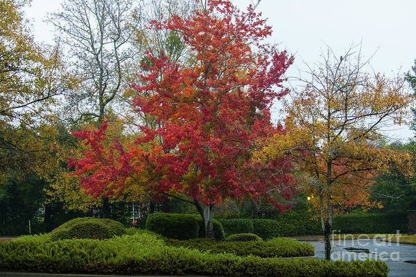 Photograph - Autumn Majesty In Charleston South Carolina by Dale Powell