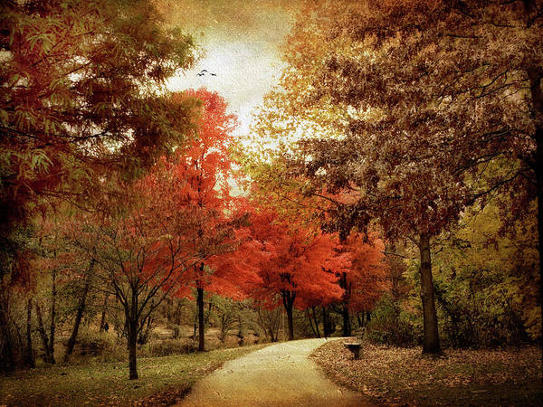 Photograph - Autumn Maples by Jessica Jenney