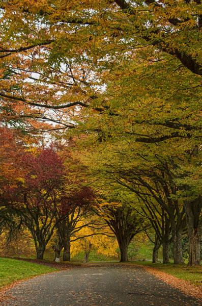 Photograph - Suddenly Autumn by Marilyn Wilson