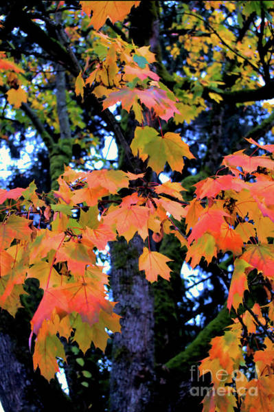 Photograph - Autumn Memories 4 by Victor K