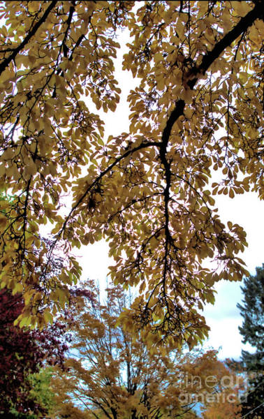 Photograph - Autumn Memories 5 by Victor K
