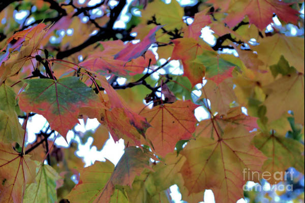 Photograph - Autumn Memories 9 by Victor K