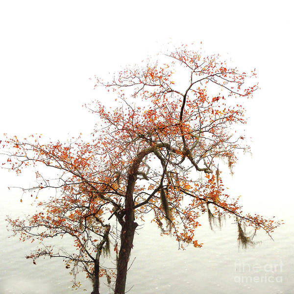 Accent Photograph - Autumn Mirage by Skip Willits