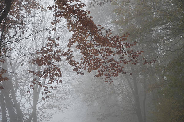 Wall Art - Digital Art - Autumn Mist And Foliage by Antique Images