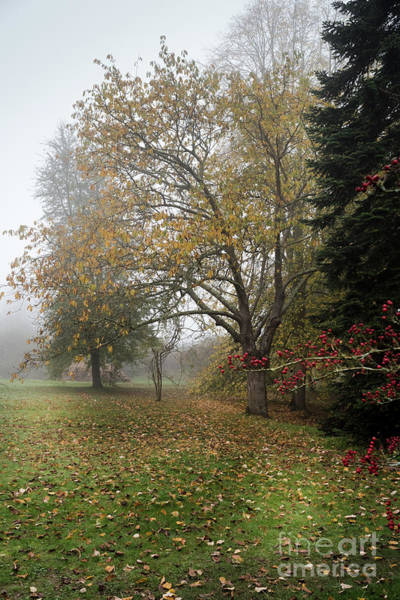 Photograph - Autumn Mist, Great Dixter Garden 2 by Perry Rodriguez
