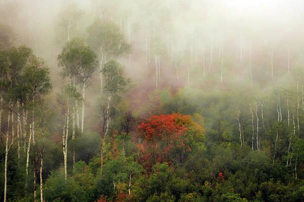 Wall Art - Photograph - Autumn Mist by Johnny Adolphson