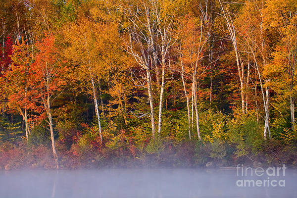 Wall Art - Photograph - Autumn Mist by Susan Cole Kelly