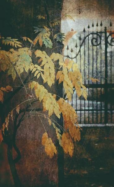Photograph - Autumn Mood by Vittorio Chiampan