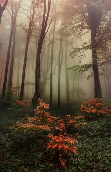 Nature Wall Art - Photograph - Autumn Mornin In Forgotten Forest by Jaroslaw Blaminsky
