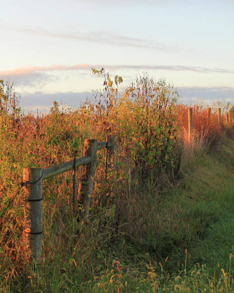Photograph - Autumn Morning by Angela Murdock