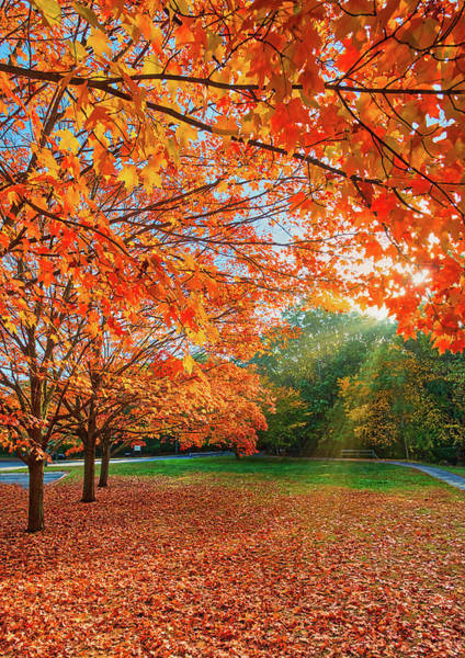 Photograph - Autumn Morning At The Park by Gary Slawsky