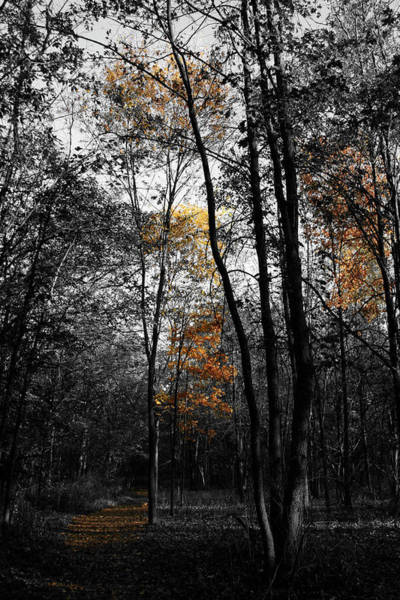 Photograph - Autumn Morning by Dylan Punke