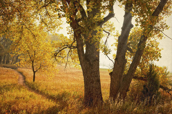 Wall Art - Photograph - Autumn Morning by Tim Reaves