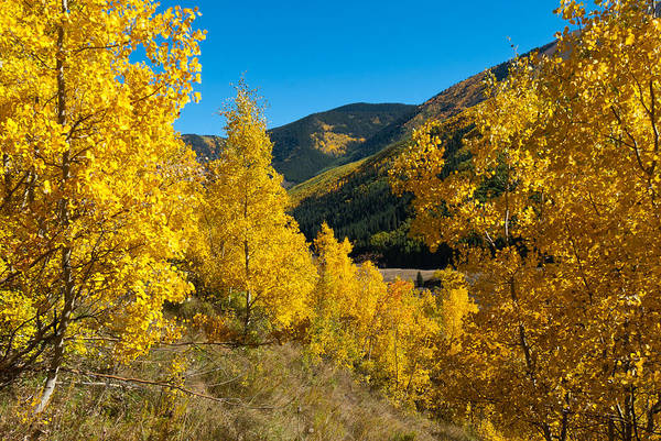 Photograph - Autumn Mountains Framed By Aspen by Cascade Colors