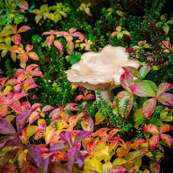 Photograph - Autumn Mushroom by Tim Newton