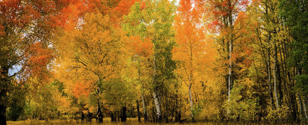 Photograph - Autumn Near The Snake River by TL Mair