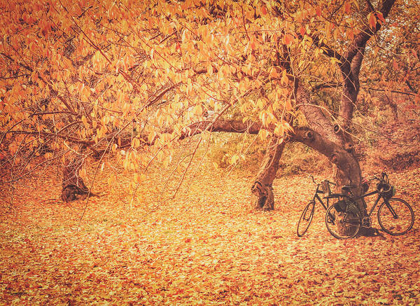 Elm Tree Photograph - Autumn - New York City by Vivienne Gucwa