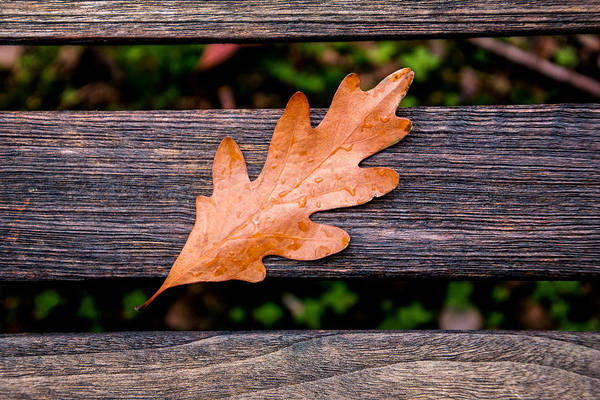 Wall Art - Photograph - Autumn Oakleaf On Bench by Tom Mc Nemar