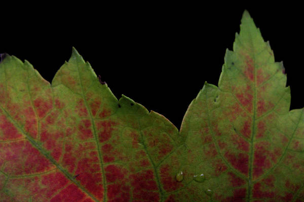 Photograph - Autumn Of The Edge by Nancy Griswold
