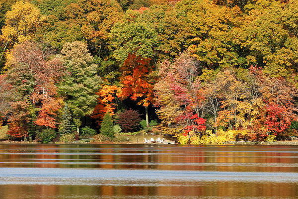 Photograph - Autumn On Canoe Brook Lake by William Selander