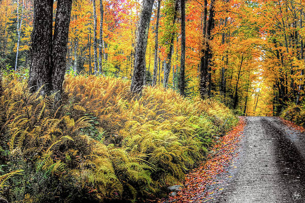 Photograph - Autumn On Long Pond Road by Wayne King