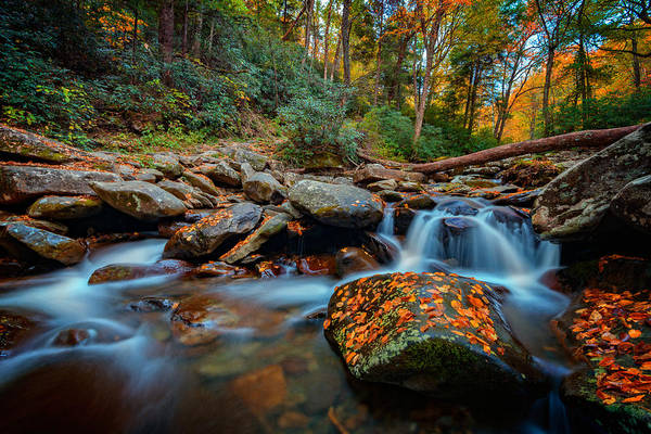 Photograph - Autumn On The Chimney Tops Trail by Rick Berk