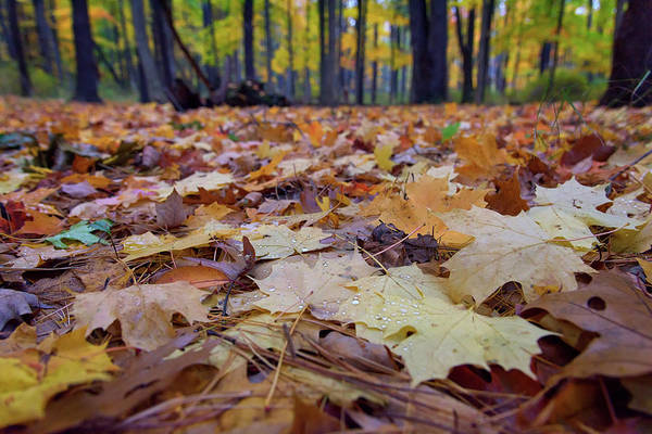 Wall Art - Photograph - Autumn On The Forest Floor by Rick Berk