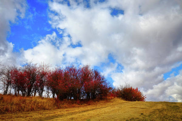 Photograph - Autumn On The Horizon by David Patterson