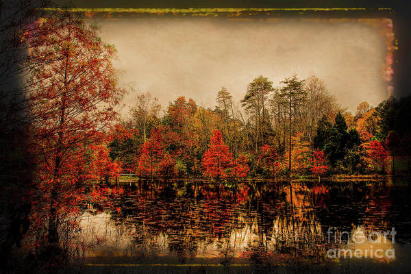 Bald Cypress Photograph - Autumn On The Lake by Darren Fisher
