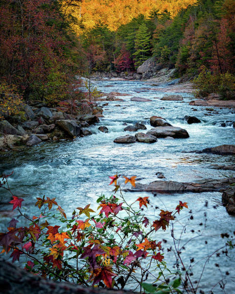 Photograph - Autumn On Wilson Creek by Mike Koenig