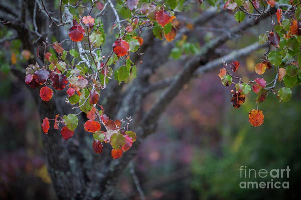 Photograph - Autumn Orange by Dale Powell