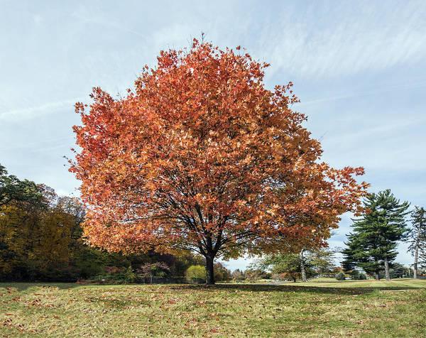 Photograph - Autumn Orange Splendor by William Bitman