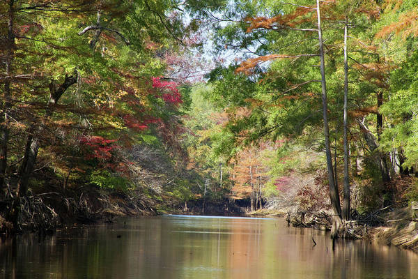Bald Cypress Wall Art - Photograph - Autumn Over Golden Waters by Lana Trussell