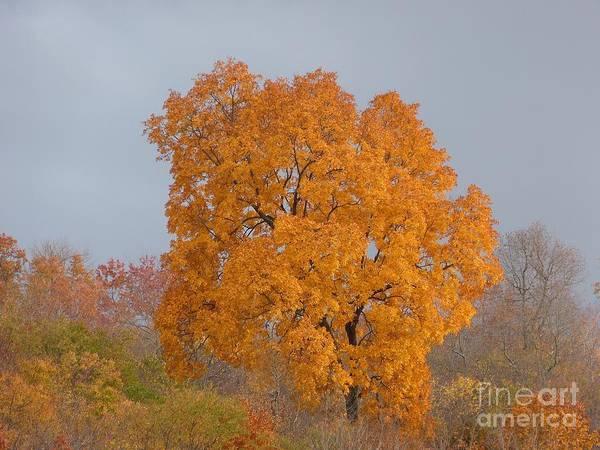 Autumn Over Prettyboy Art Print