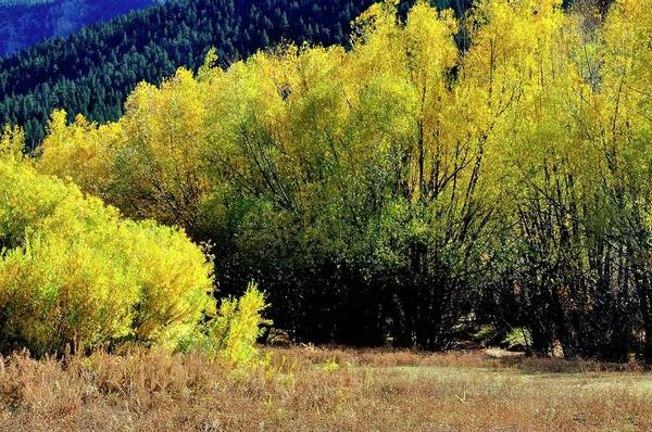 Photograph - Autumn Pasture by Jerry Sodorff