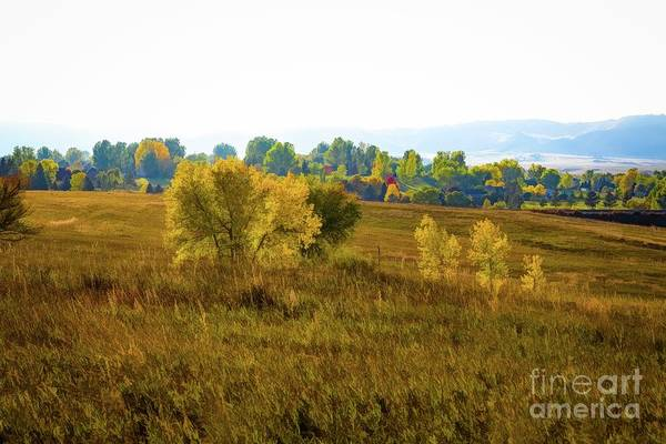 Photograph - Autumn Pasture by Jon Burch Photography
